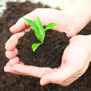 Terreaux, paillages et engrais